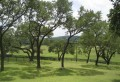 60 Oak filled acres