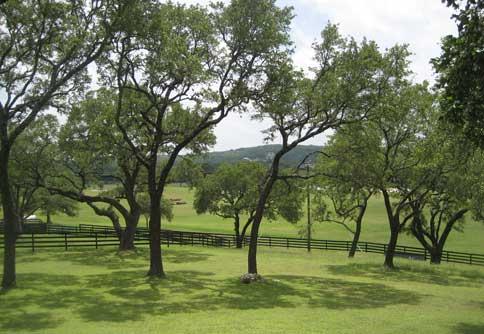 60 Oak filled acres